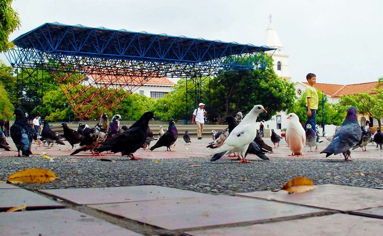 Habitantes de la plaza